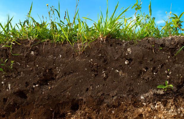Terra substrato ou condicionador o que melhor para sua for Solo piante